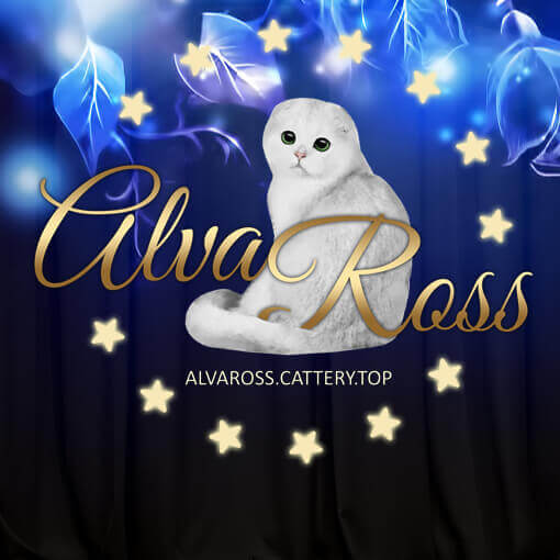 Scottish cats cattery AlvaRoss (1)